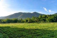 Sojabohnenlandwirtschaft und -berg Stockbild