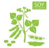 Sojabonensilhouet Vectordieillustraties op een witte achtergrond worden geplaatst Sojabonenproteïne Stock Foto