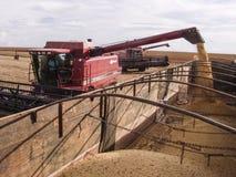 Sojaboon het oogsten Stock Afbeelding