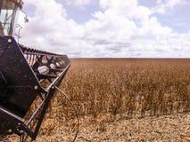 Sojaboon het oogsten Stock Foto