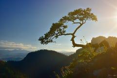 Sokolica峰顶日落视图在Pieniny山的 库存照片