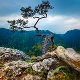 Sokolica peak in Pieniny Mountains, Poland Royalty Free Stock Photos