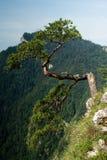 Sokolica peak in Poland. The Sokolica peak in the mountains of Pieniny, Poland Stock Photography