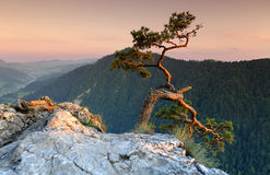 Sokolica in Pieniny Poland Stock Image