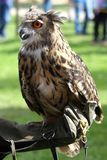 Sokolnik z sową na stażowej rękawiczce Zdjęcia Royalty Free