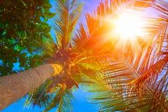 Sol över gröna palmblad för dublin för bilstadsbegrepp litet lopp översikt Tropiskt begrepp tropisk bakgrund Royaltyfri Fotografi
