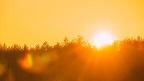 Sol över horisontträn eller Forest With Orange Sunset Sky colors naturligt royaltyfri bild