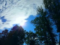 Sol över träd Royaltyfri Foto
