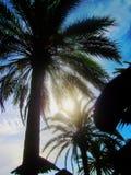 Sol artístico através das palmas 1 imagens de stock royalty free