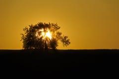Sol bak ett träd Royaltyfria Foton