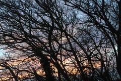 Sol bak trädfilialer i dag royaltyfri bild