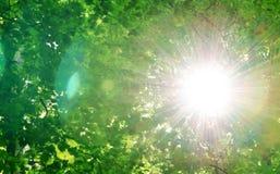Sol bland träd Royaltyfri Foto