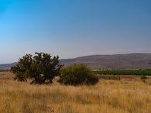 Sol-bränt gräs, gröna träd mot den blåa himlen Royaltyfri Foto
