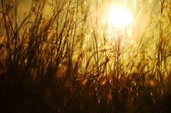 Sol brandnew do dia do conceito abstrato que aumenta sobre a grama selvagem longa Foto de Stock Royalty Free