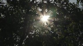 Sol brilhante atr?s dos ramos de ?rvore video estoque