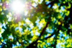 Sol brilhante que brilha através das folhas fora de foco da árvore Imagens de Stock