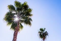 Sol brilhante que filtra através das folhas de uma palmeira fotos de stock