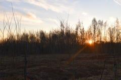 Sol brillante detrás de los árboles imagen de archivo libre de regalías