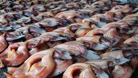 soląca ryb Zdjęcia Stock