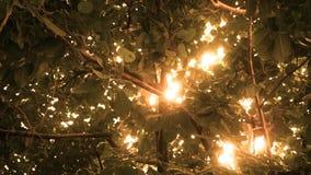 Sol cinemática ambarina que brilla a través de un toldo de la selva almacen de metraje de vídeo
