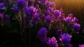 Sol colorido num campo de flores filme