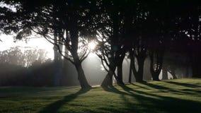 Sol da árvore Imagem de Stock