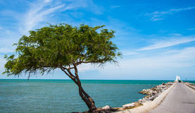 Sol da areia do mar verde Foto de Stock