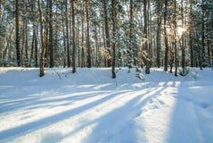 Sol da geada do inverno da floresta da neve da manhã Fotos de Stock