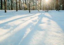 Sol da geada do inverno da floresta da neve da manhã Foto de Stock Royalty Free