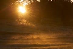 Sol da manhã do outono que brilha através das árvores Fotografia de Stock