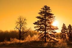 Sol da manhã no tempo de inverno Imagens de Stock