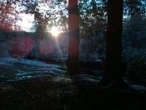 Sol da manhã que brilha Foto de Stock