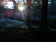 Sol da manhã que brilha Foto de Stock Royalty Free