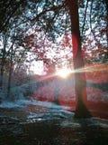Sol da manhã que brilha Fotografia de Stock