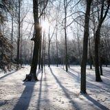 Sol da manhã que brilha através das árvores em um dia gelado nevado Fotografia de Stock Royalty Free