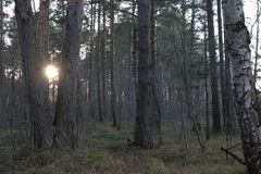 Sol de ajuste na região selvagem da floresta fotos de stock royalty free