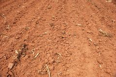 Sol de canne à sucre Image stock