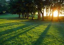 Sol de configuración entre los árboles horizontales Foto de archivo libre de regalías