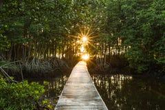 Sol de la mañana Fotografía de archivo libre de regalías