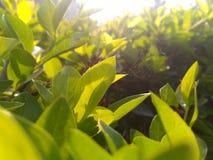 Sol de la mañana Imagenes de archivo