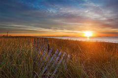 Sol de la mañana en las hierbas de la duna Imagen de archivo