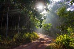Sol de la mañana que brilla Fotografía de archivo libre de regalías