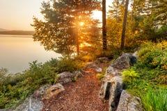 Sol de la mañana a través de árboles Imágenes de archivo libres de regalías