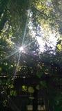 Sol de la mañana a través de los miembros Imagen de archivo libre de regalías