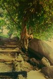 Sol de la mañana, brillando a través de los árboles, un bosque del camino Foto de archivo