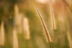 Sol de la mañana que brilla en wildflowers Foto de archivo