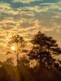 Sol de la madrugada que brilla entre los árboles Imagen de archivo libre de regalías