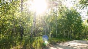 Sol de la naturaleza de las plantas del bosque metrajes