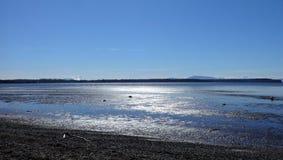 Sol de la primavera en la playa de la bahía del abedul Imagenes de archivo