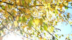 Sol de la rama de las hojas de otoño almacen de video